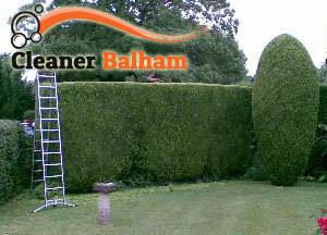 Hedge Maintenance Balham